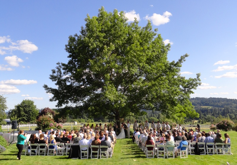 Wedding Ceremony at the Big Tree at Long Farm Barn